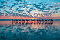 Camels in Broome, Australia-