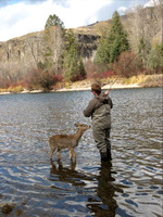 Fishing with Deer